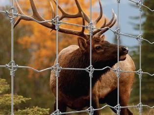 Wildlife Zaun 200/17/15 STAY LOCK / TIGHTLOCK (100m)
